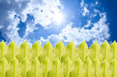 Green leaf and blue sky — Stock Photo