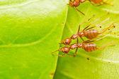 红蚂蚁团队合作 — 图库照片