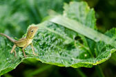 Lizard in green nature — Stock Photo