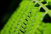 La hoja verde y gotas de agua — Foto de Stock