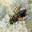 Ants and wasp in green nature or in garden - Stock Photo