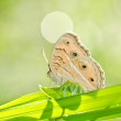Butterfly in green nature — Foto Stock