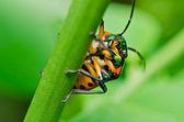 緑の自然の玉虫 — ストック写真