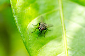 Voler dans la nature verdoyante — Photo