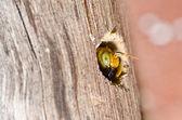 Mamangava na natureza — Foto Stock