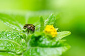 Brown bug in green nature — Stock Photo