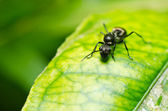 Black ant in green nature — Stock Photo