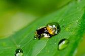Yeşil doğanın turuncu böceği — Stok fotoğraf