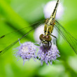 Dragonfly in garden — Stockfoto