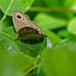 Butterfly in green nature - Foto de Stock