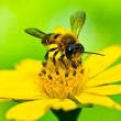 Bee in green nature — Stock Photo #9654195