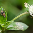 Fly in green nature — Stock Photo #9659852