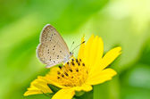 Butterfly in green nature — Stock Photo