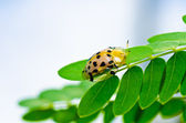 Orange beetle in green nature — Stock Photo