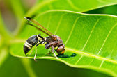 Wasp in green nature or in garden — Stock Photo