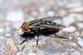 Fliegen in der grünen natur — Stockfoto