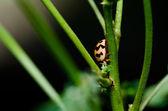 Marienkäfer in der grünen Natur — Stockfoto