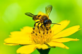 Bee in green nature — Stock Photo