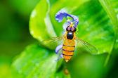 水果中文件或花卉文件绿色自然 — 图库照片
