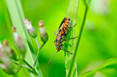Red bug in green nature — Stock Photo