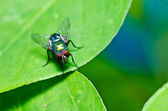 Fly in green nature — Stock Photo