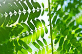 Green leaf and sunlight — Stock Photo