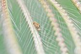 緑の自然のハエトリグモ — ストック写真