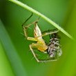 Long legs spider in green nature - Stock Photo