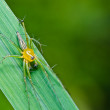 Long legs spider in green nature - Foto de Stock