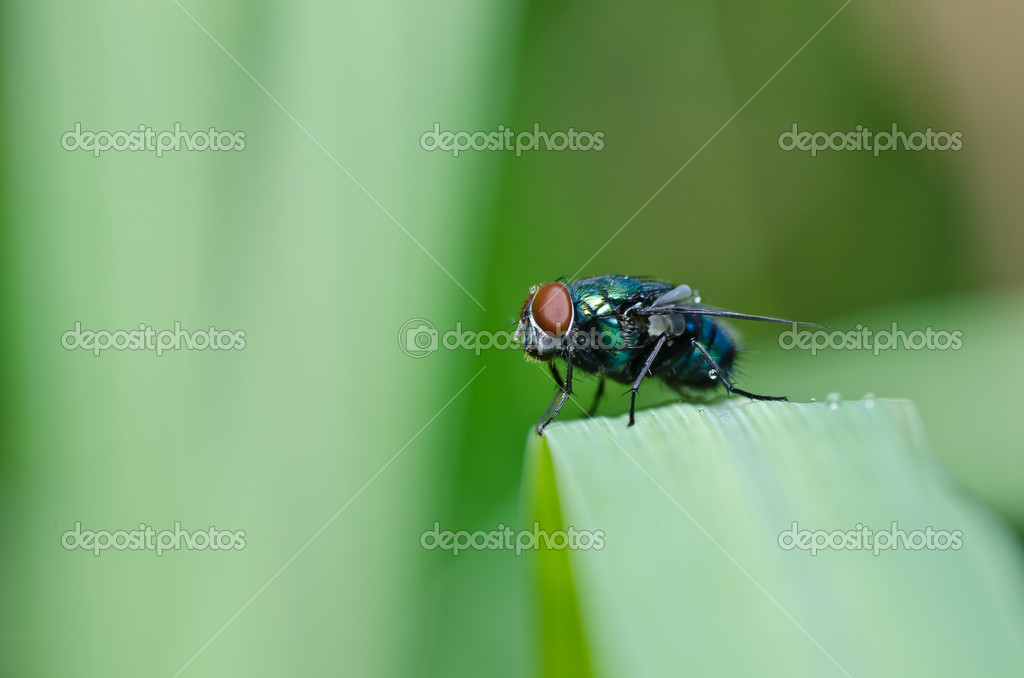 Green fly in green nature or in the city — Stock Photo #9665292