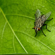 Fly in green nature — Stockfoto