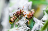 Wasp and Cactus macro in green nature or in garden — Stock Photo