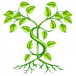 Cash money plant growth concept - Stock Vector