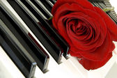 Red rose on piano — Stock Photo