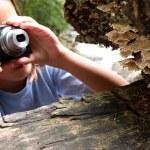 Photographing mushrooms — Stock Photo #9139431