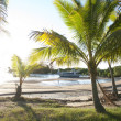 Different sized palm trees growing in bay — Stock Photo