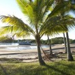 Stock Photo: Tropical palm trees at beach with anchored boat