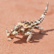 Thorny Devil Lizard with shadow on red outback sand — Stock Photo #9764832