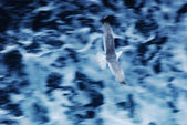 Seagull with motion blur over water — Stock Photo
