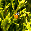 Ladybird on tree - Stock Photo