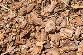 Bark forest Shred background — Stock Photo