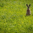 Rabbit sitting in the meadow - Stock Photo