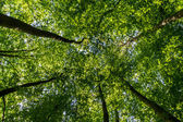 Green forest looking up — Stock Photo