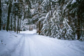 Snowy road in forest at winter — Stock Photo