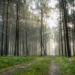 Foothpath in foggy forest at sunrise — Stock Photo
