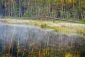 Misty lake in the woods — Stock Photo