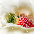 Closeup strawberry falling into milk — Photo