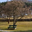 Stock Photo: Bench under tree