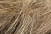Straw grass — Stock Photo