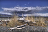 Driftwood by the sea — ストック写真